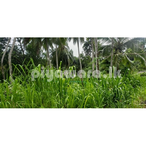 Land for sale at Dompe