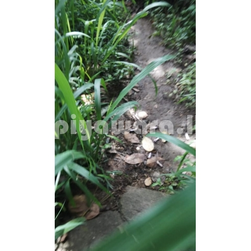 Land for sale at Thennakubura