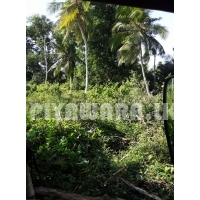 Land for sale at walsmulla