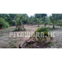 Land for sale at Dabulla